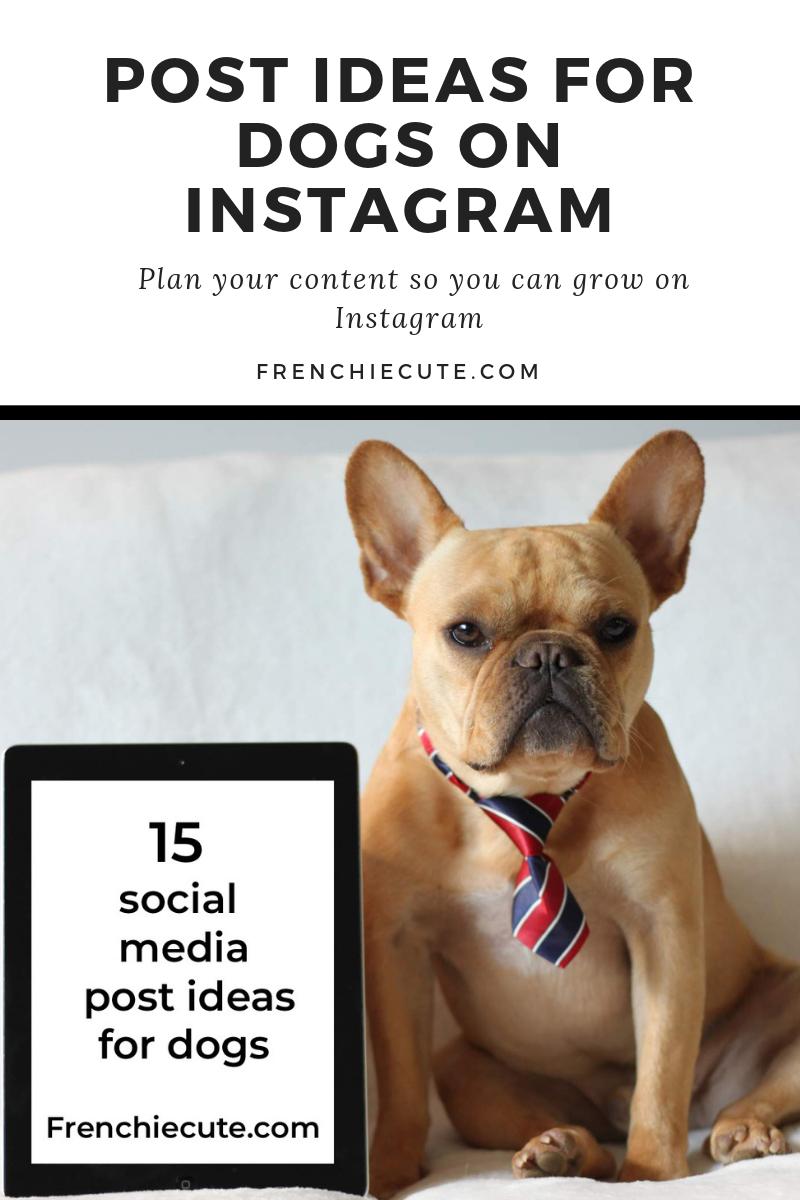social media post ideas for dogs on instagram