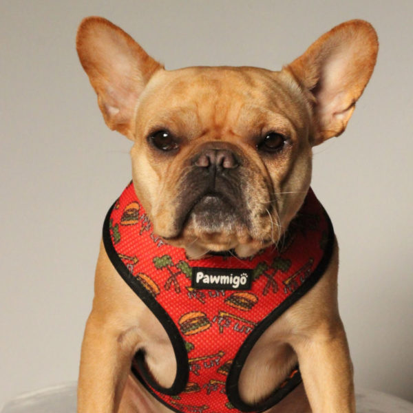 fashionable harnesses fr french bulldogs