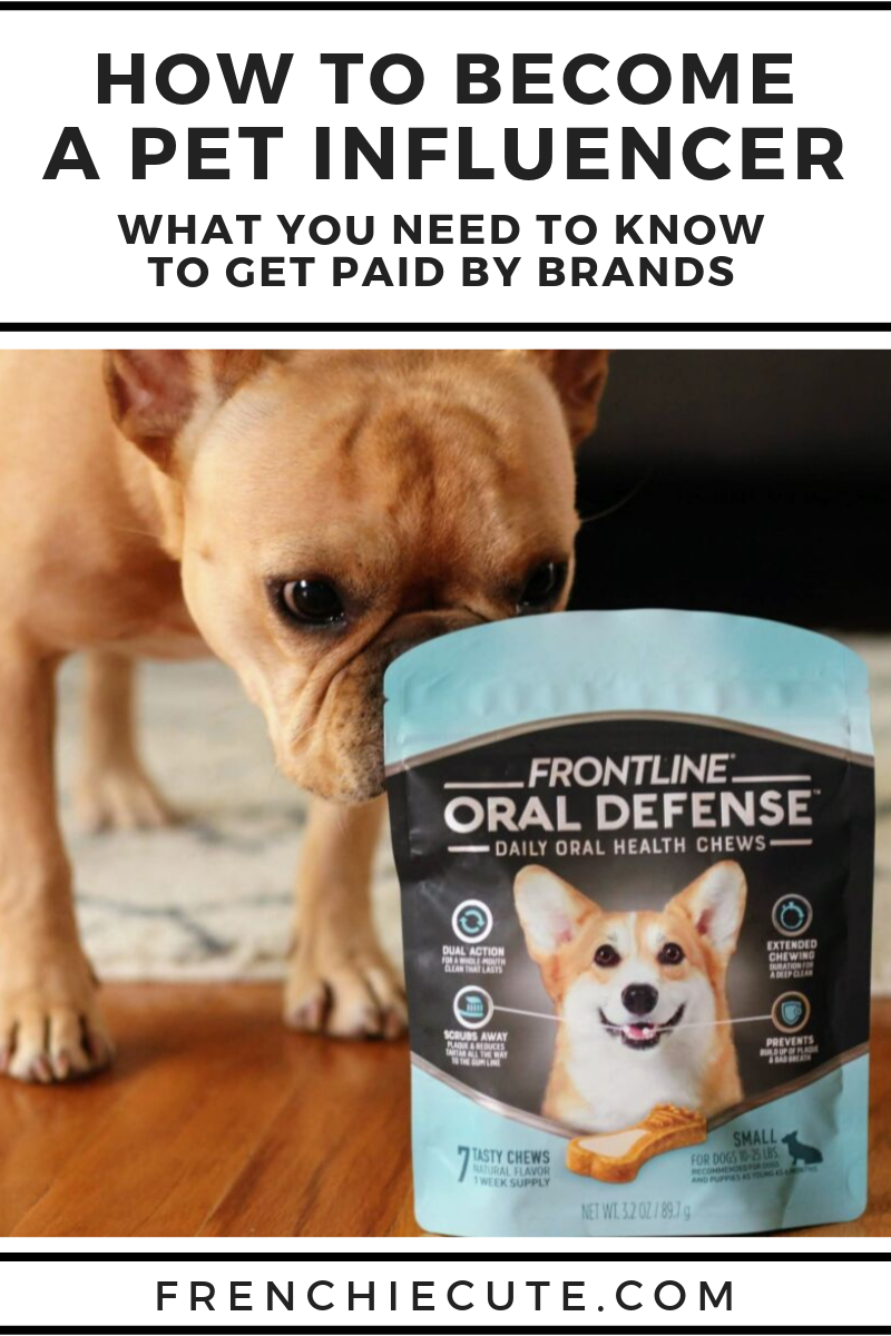 How to become to a Pet Influencer
